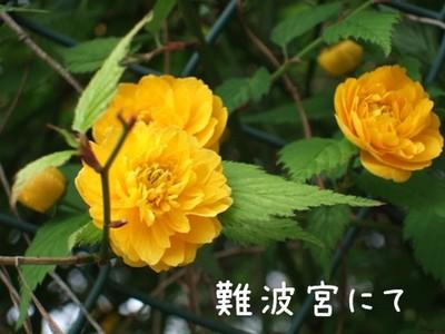 2006_0409marron0069