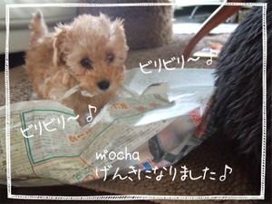 2006_0604marron0025
