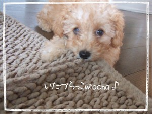 2006_0604marron0047_1