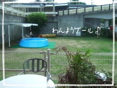 2006_0713marron0039