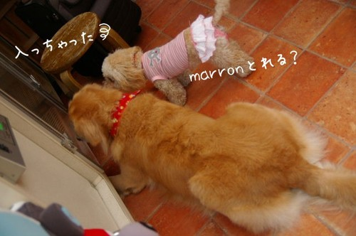 2007_0128marron0037