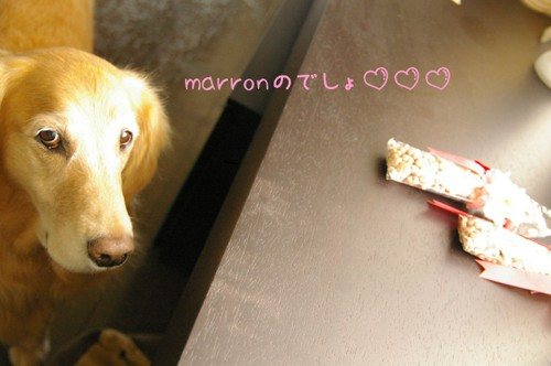 2007_0312marron0018