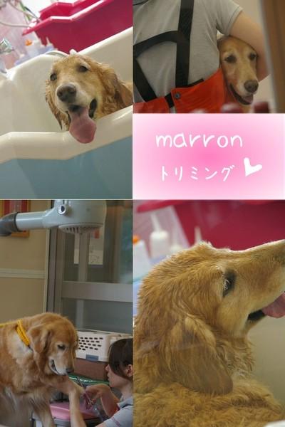 2007_0502marron0145