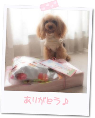Photo16143821mocha098