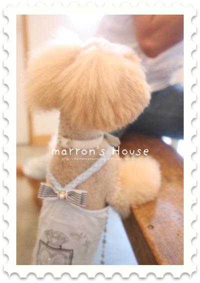 Sakuracafe_001_400x600