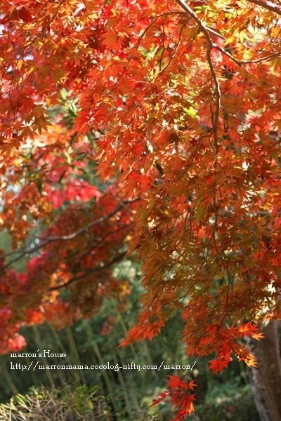 Awajishima201022_2