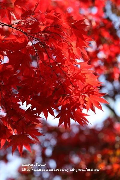 Awajishima201036