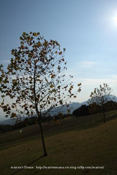 Awajishima_365_400x600_4