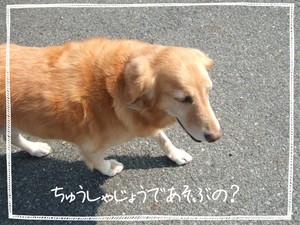 marron200637_016