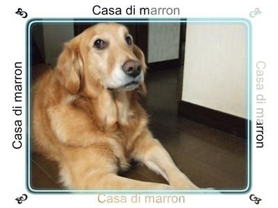 marron_053_1278x959