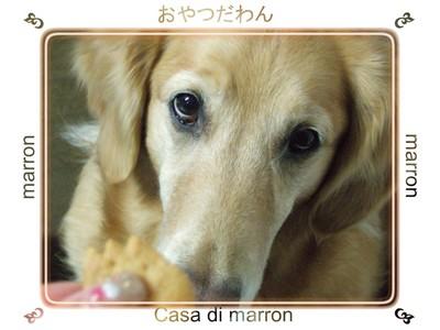 marron_056_1278x959