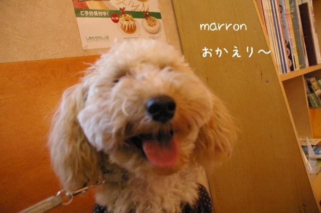 2006_1124marron0034
